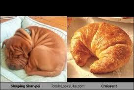 Croissant Meme - this sleeping shar pei totally looks like a croissant randomoverload