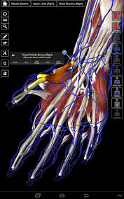essential anatomy 3 apk essential anatomy 3 apk version 1 1 3 apk plus