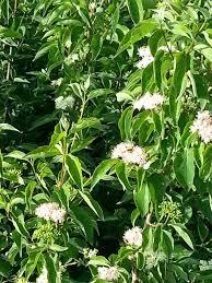 texas native plants database friends of hagerman national wildlife refuge may 2014