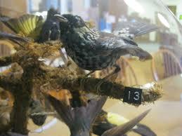 bird case 4 patterson library westfield new york