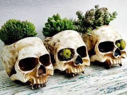Backyard Skulls 166 Best Skulls And Art Images On Pinterest Skull Art Sugar