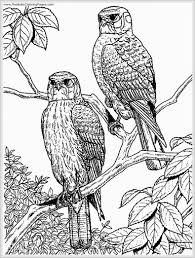 coloring birds of prey coloring pages