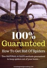 How To Keep Spiders Out Of Your Bed Get Rid Of Bugs In Your Home In 2 Hours Recipe Homemade Bug