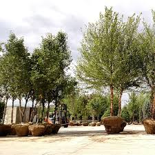 plant delivery delivery acorn farms wholesale trees shrubs perennials and annuals