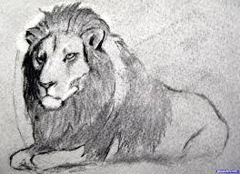 drawn fur drawing lion fur pencil and in color drawn fur drawing