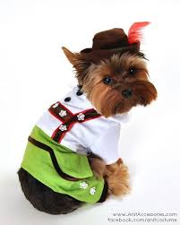 Small Dog Halloween Costumes Ideas 112 Dog Costumes Images Animal Costumes Dog