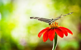 butterfly flowers butterfly on flower 6939461