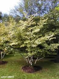 shade plant recommendations plants for special conditions
