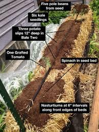 straw bale garden update quarto homes