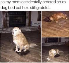 Dog Doctor Meme - wholesome dog memes