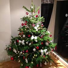 real christmas tree sumptuous design ideas real christmas tree manchester strikingly