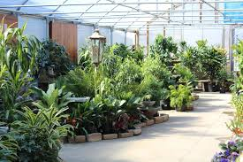 greenhouse 2 family tree nursery