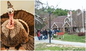 pig out with pilgrims a plimoth plantation thanksgiving mwl