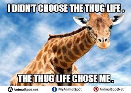 Giraffe Hat Meme - giraffe meme different types of funny animal memes pinterest
