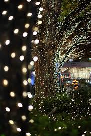 christmas tree flower lights wallpaper night reflection branch christmas tree christmas