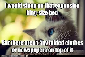 First World Memes - i can has cheezburger first world cat problems funny animals
