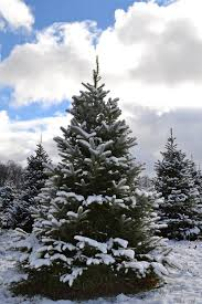 evergreen view farmchristmas trees welcome
