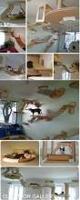 Homemade Cat Hammock by Best 25 Cat Houses Ideas On Pinterest Cat House Diy Cat Trees
