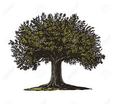 vector illustration of a fruit tree in vintage engraving style