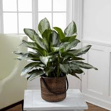 good houseplants for low light best indoor plants according to different light conditions