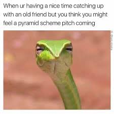Reptile Memes - when you re having a nice time catching up with an old friend