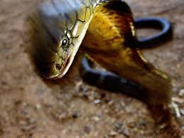 snake pictures national geographic