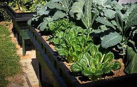 large raised garden bed with garden cover u2013 vegepod australia