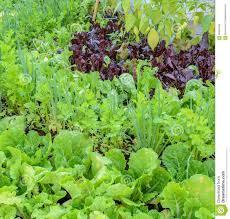 eco friendly backyard vegetable garden stock photo image 63990554