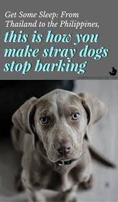 how to get dog to stop barking how to make street dogs stop barking with a simple trick barking