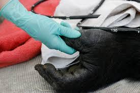 dallas zoo a h meadows animal health care facility