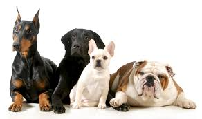 what u0027s the best dog breed for you to get playbuzz