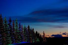 matthew sim nature photography christmas scenery
