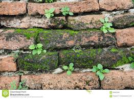small plants growing on a wall stock photo image 63902290