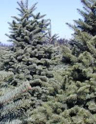 Washington Christmas Tree Farms - christmas tree farm vancouver wa rainforest islands ferry