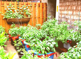 Ideas For Container Gardens Container Gardening Tomatoes Archives Garden Trends 2018