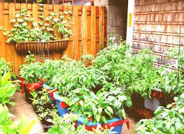 Container Garden Design Ideas Container Gardening Tomatoes Archives Garden Trends 2018