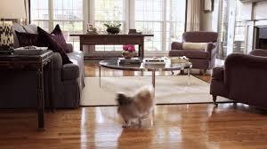 shine hardwood floor luster multi surface floor finish