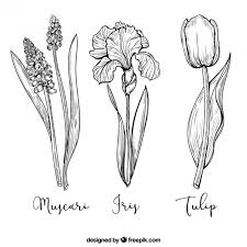 tulip vectors photos and psd files free download