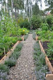 the basics of planning your vegetable garden herbs raising and