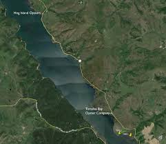 Tomales Bay Map Save Our Tomales Bay U2013 Part 13 2 Hog Island Oysters Gets It Done