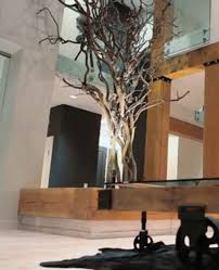 does anyone where i can source an indoor tree like this