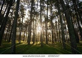 pine tree gardens exhort me