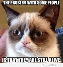 Meme Chat - grumpy cat le chat qui tire la gueule