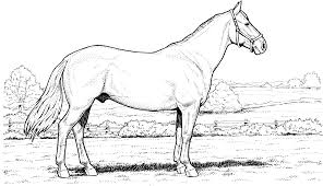 horses coloring pages coloringsuite com