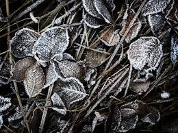free stock photos rgbstock free stock images winter texture