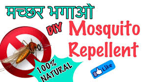 diy natural mosquito repellent homemade natural mosquito