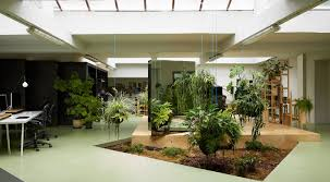 plant office plants wonderful office plants 10 plants you can t