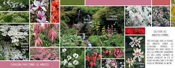 fleurs vivaces rustiques floraisons pour l u0027ombre les arbustes