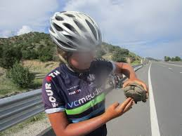 share the damn road cycling jersey bicycling pinterest road phoebe and harriet cycle the world