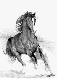 what are the best pencil sketches of running horses
